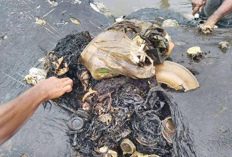 К берегу Индонезии прибило кашалота, желудок которого был набит пластиковыми стаканчиками wwf, животные, загрязнение окружающей среды, индонезия, кашалот, пластик