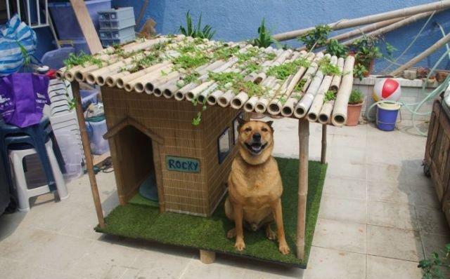 Как сделать собаку счастливой? будка для собаки, креатив для собак, креатив своими руками, своими руками