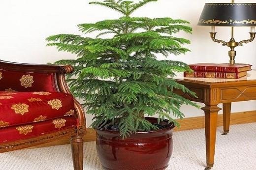 Комнатные растения фото: каталог, энциклопедия комнатных растений, домашние растения каталог и уход