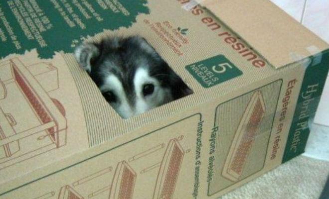 Собака ведет себя как кошка