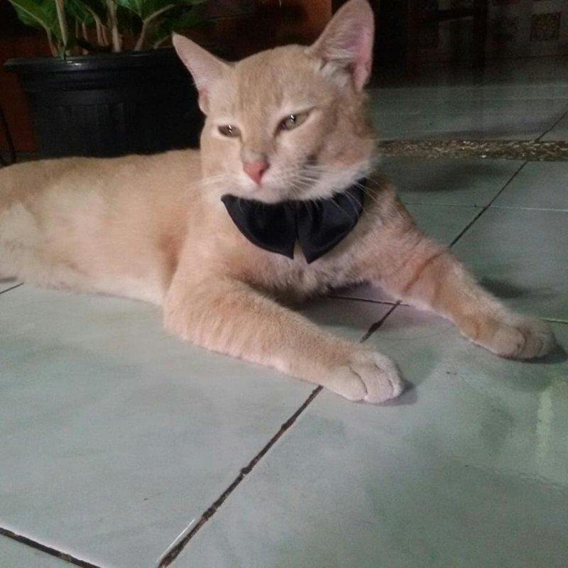 Подборка действительно опасных котов кот, коты, опасный кот, прикол, суровый