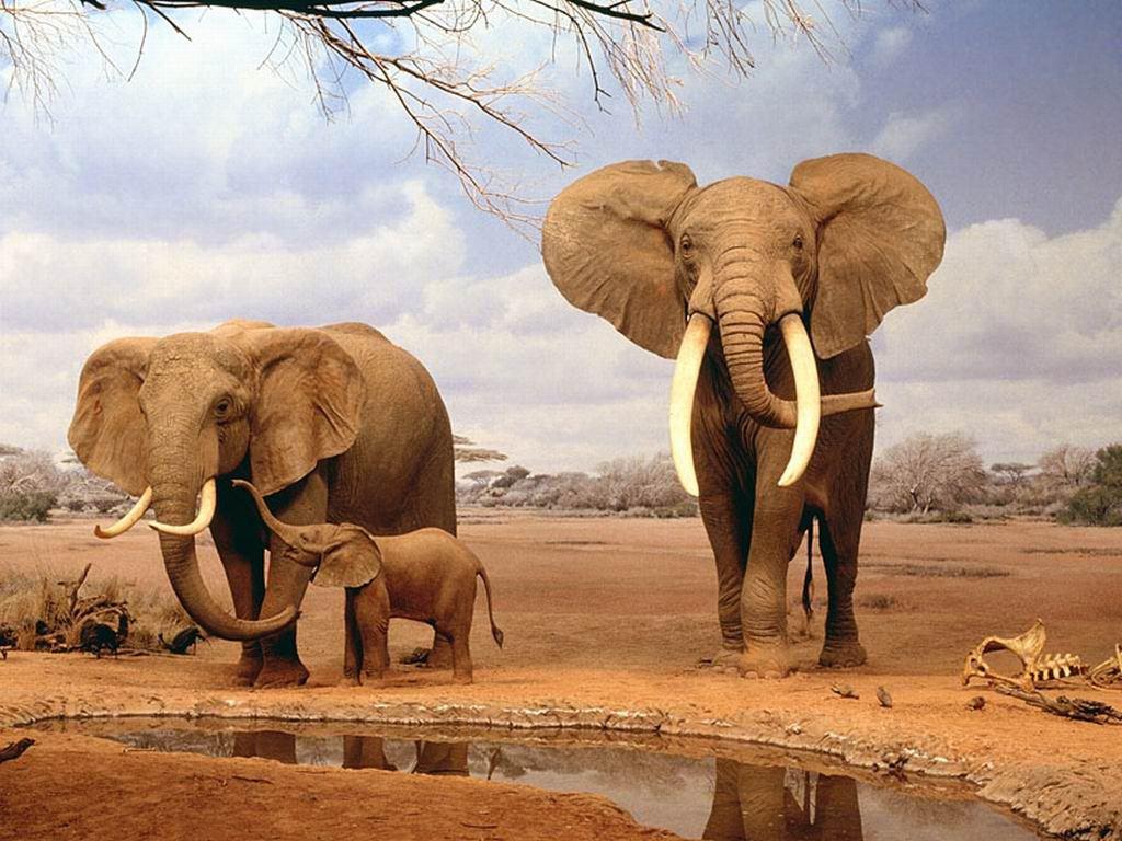 «Мы отличаемся умом и сообразительностью!» или несколько животных, которых ошибочно считают глупыми существами