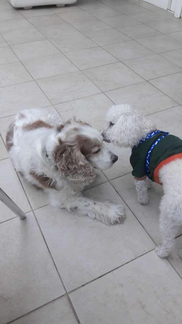 две собаки играют