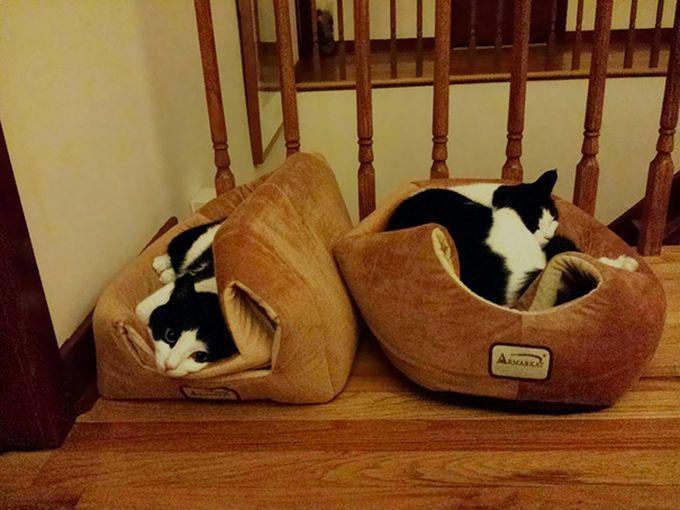 14. Кошачья логика… животные, кошка, логика