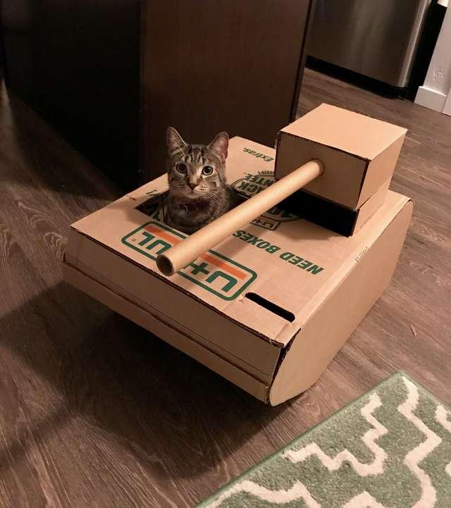 «Ага, присмотрю за котами!» — сказал парень… И начал строить для них танки из картона коты