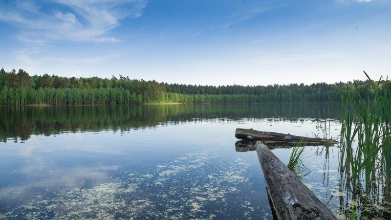 Алтай, озеро Светлое. алтай, озёра, путешествия, фото