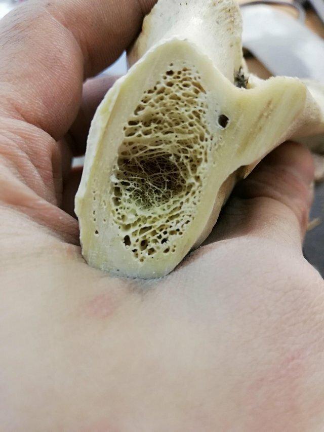 2. Так выглядит кость в разрезе вещи, внутри, изнутри, подборка, разрез, фото