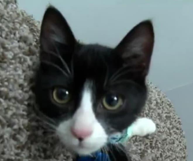 Маленький котенок едва не погиб на дороге, но это изменило всю его судьбу