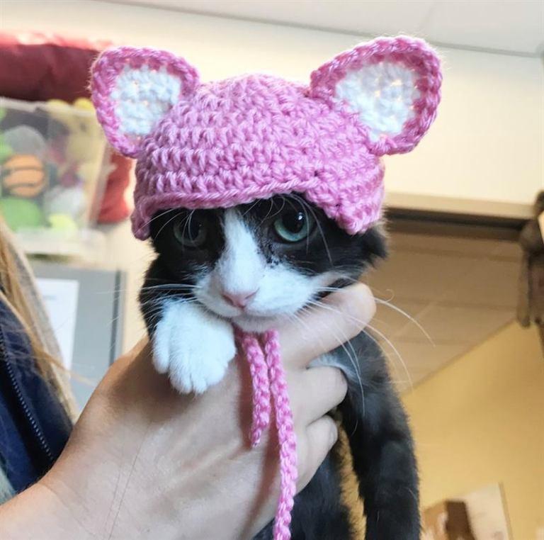 Этот котенок остался без ушек, теперь он боится людей! Но все изменилось, когда появились они!