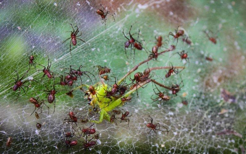 Зомби-рабы в мире насекомых, как раб становится едой, нянькой и телохранителем хозяина-паразита зомби, наука, осы, пауки, рабы, энтомология
