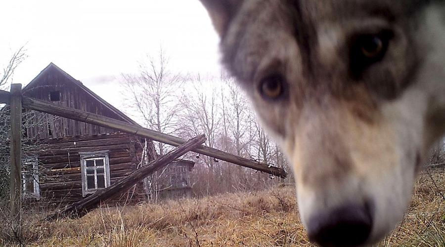 Чернобыль: изменения, которые происходят в зоне отчуждения