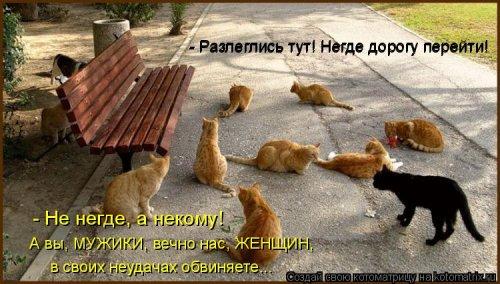 Лучшая котоматрица недели  позитив,смешные картинки,юмор