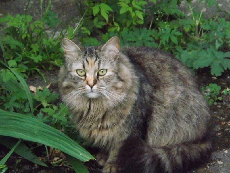 Немного котиков животные, коты, фото