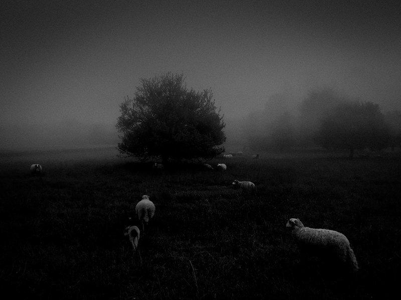 "Sukru Mehmet Omur, Франция - 1 место в категории ""Природа"" IPPAWARDS, Winners of the 2018 iPhone Photography Awards, iphone, ynews, фото"