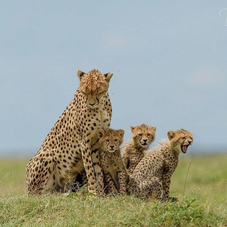 Селебрити ополчились на убийцу леопарда и запустили флешмоб c хештегом #найдитеэтусуку #findthisbitch, #найдитеэтусуку, Safari Club International, охота на животных, сафари