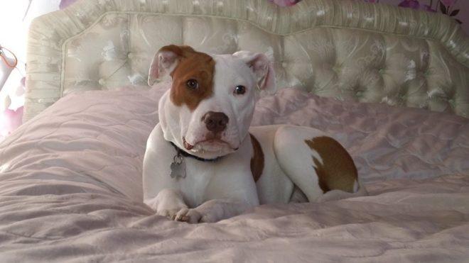 Собаку пять раз возвращали в приют за непослушание, не зная, что несчастный пес имел на то вескую причину