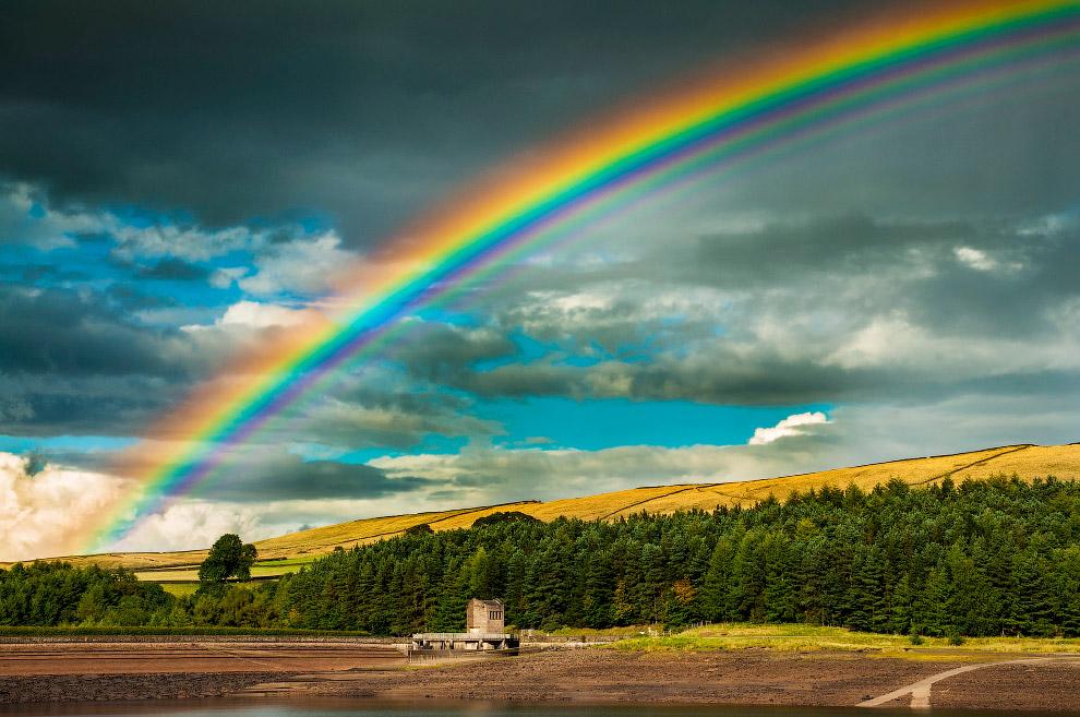 выглядело самые необычно красивые фото радуги многолетник, произрастающий