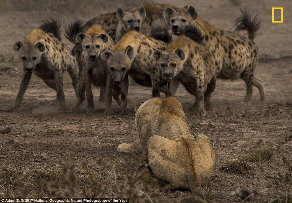 Фотографии, принимающие участие в конкурсе National Geographic Nature Photographer of the Year 2017