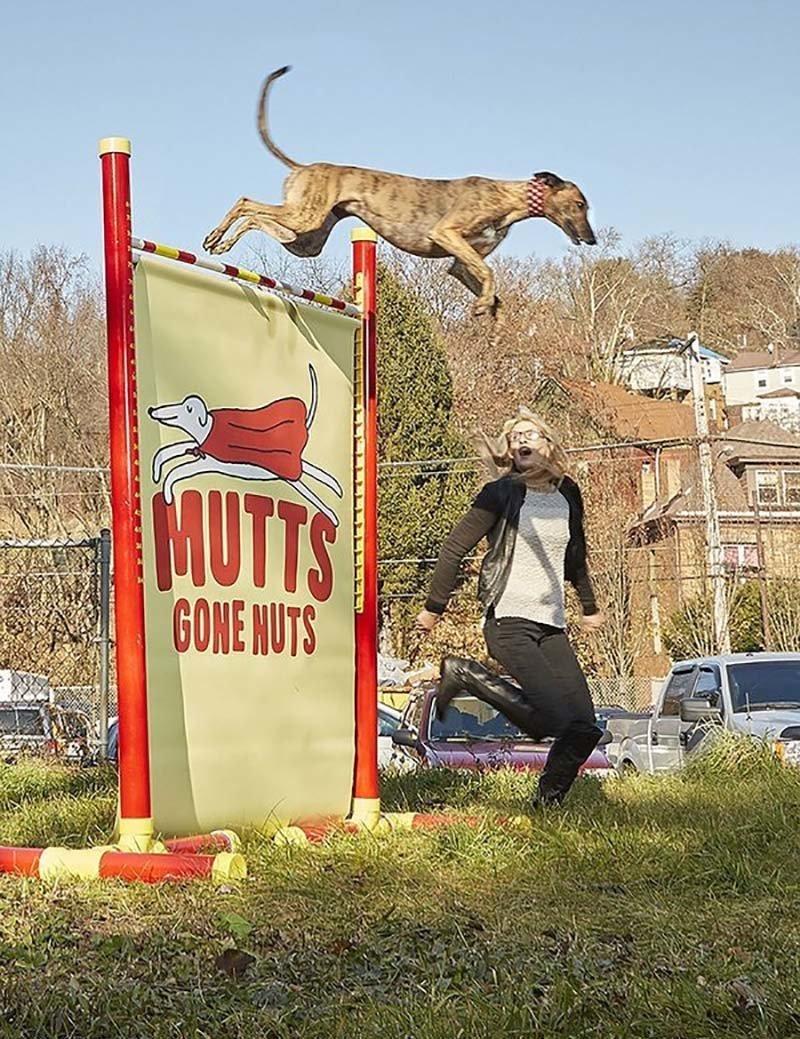 2-летняя собака по кличке Физер, принадлежащая американке Саманте Валле, установила рекорд среди собак по прыжкам в высоту, преодолев барьер высотой 191,7 см в мире, гиннесс, животные, люди, рекорд, факты