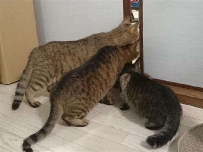 Как выглядит настоящее кошачье любопытство
