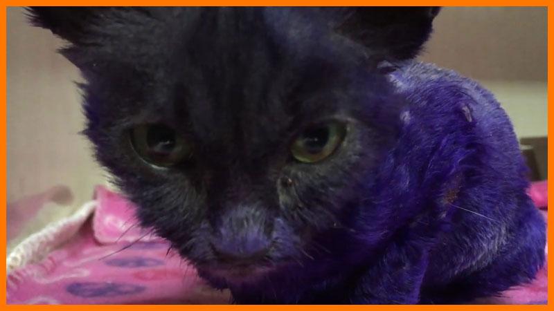 Что стало с фиолетовым котенком Смурфом?