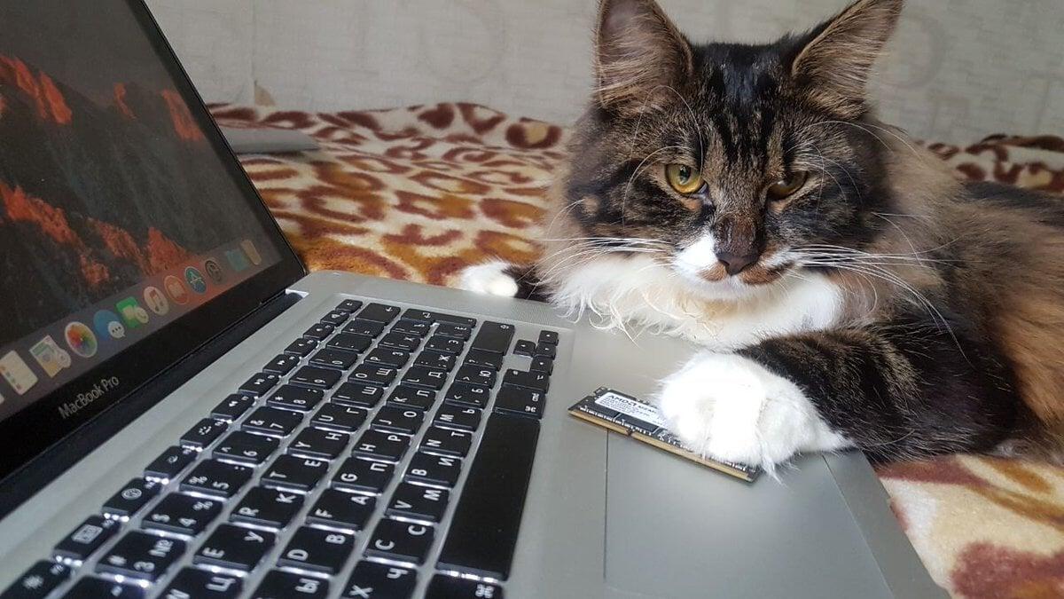 Кот Мишка животные,Истории из жизни,отношения,позитив