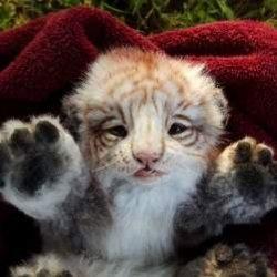 Плюшевые детеныши животных от Ли Кросс