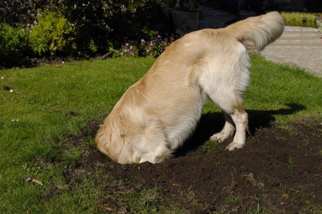 Собака на газоне