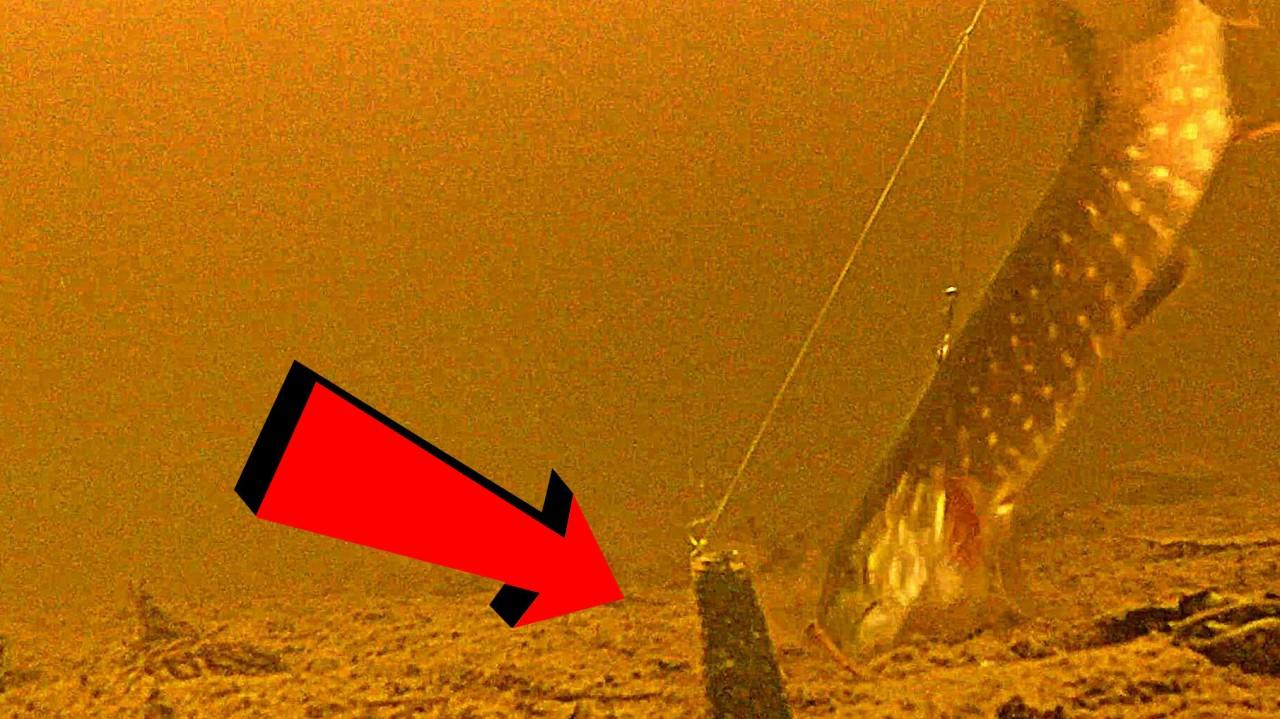ВОТ ЭТО АТАКА!!! Щука кушает карася! Подводная съемка