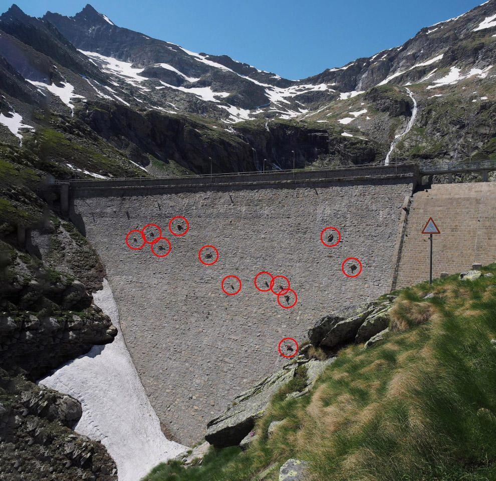 Альпийские козы, которые нарушают гравитацию животные