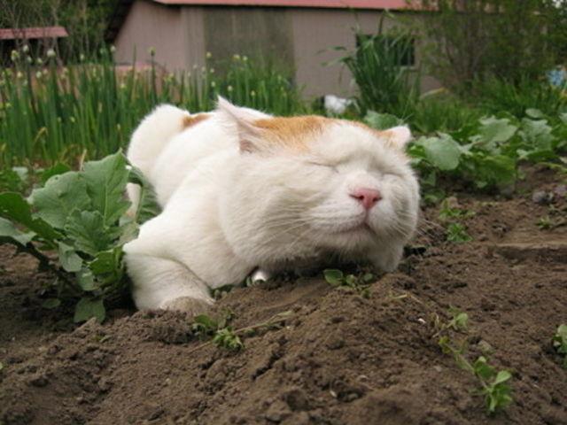 Почему кот ест землю: нарушения психики или нехватка витаминов?