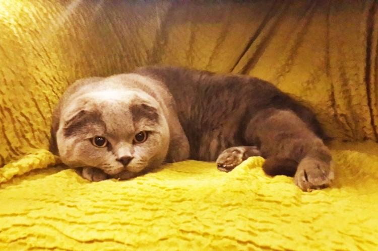 «Он исполняет любые желания»: в Новосибирске продают кота за 10 миллионов рублей