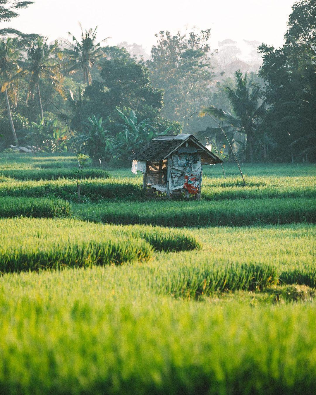 """Снимки из путешествий Суты Рахади, каждый из которых можно считать признанием в любви нашей планете Рахади, нашем, самом, сердце, люблю, фиксировать, моменты, происходящие, восхитительном, фотографий, райском, острове, Индонезии"""", говорит, фотограф, Читать, """"Находясь, свадебных, Rahady, фокусируется"""