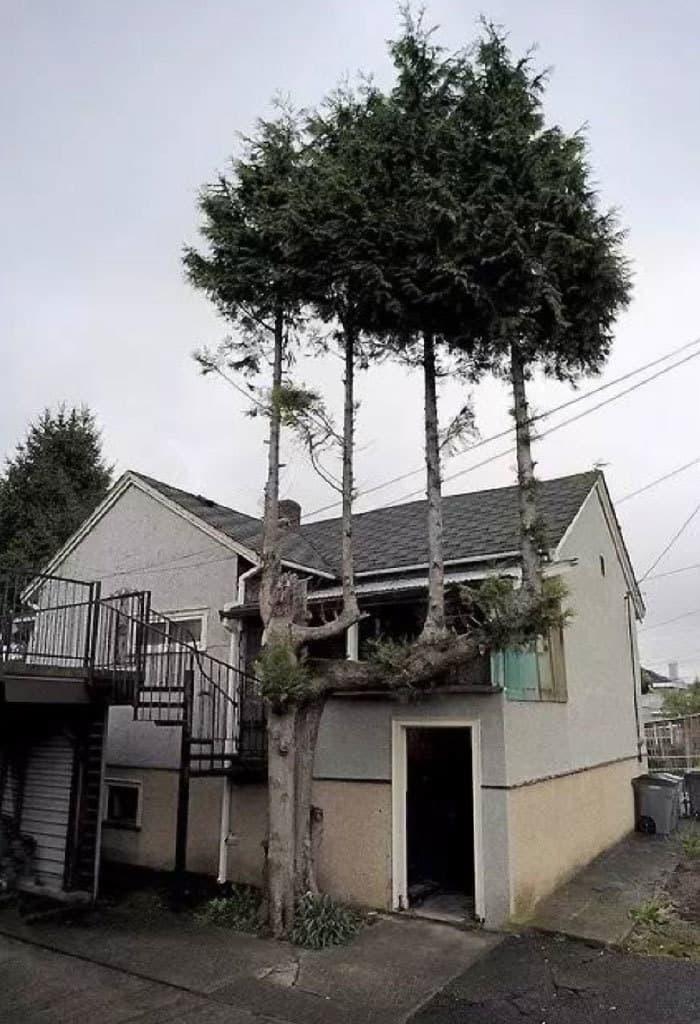 Trees On A Tree