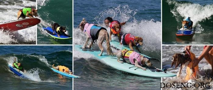Соревнования по серфингу сре…
