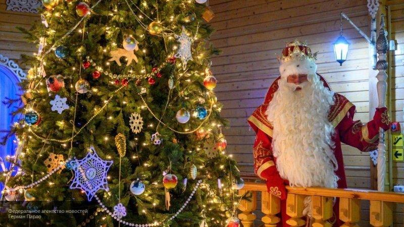 Специалисты раскрыли полезные свойства новогодней живой елки