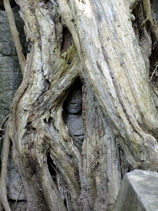 Деревья, поглощающие всё вокруг: пугающие фото