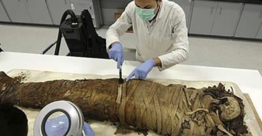 Анализ ДНК почти 100 египетс…