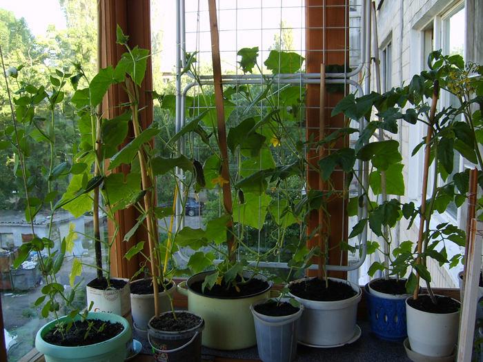 Балкон, веранда, патио в цветах: черный, серый, темно-зеленый. Балкон, веранда, патио в стиле экологический стиль.