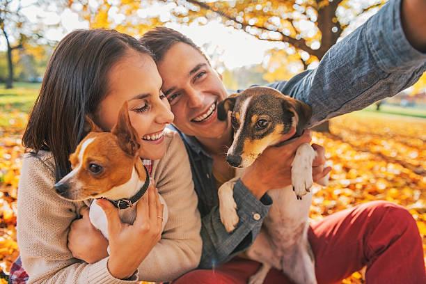 собаки и пара