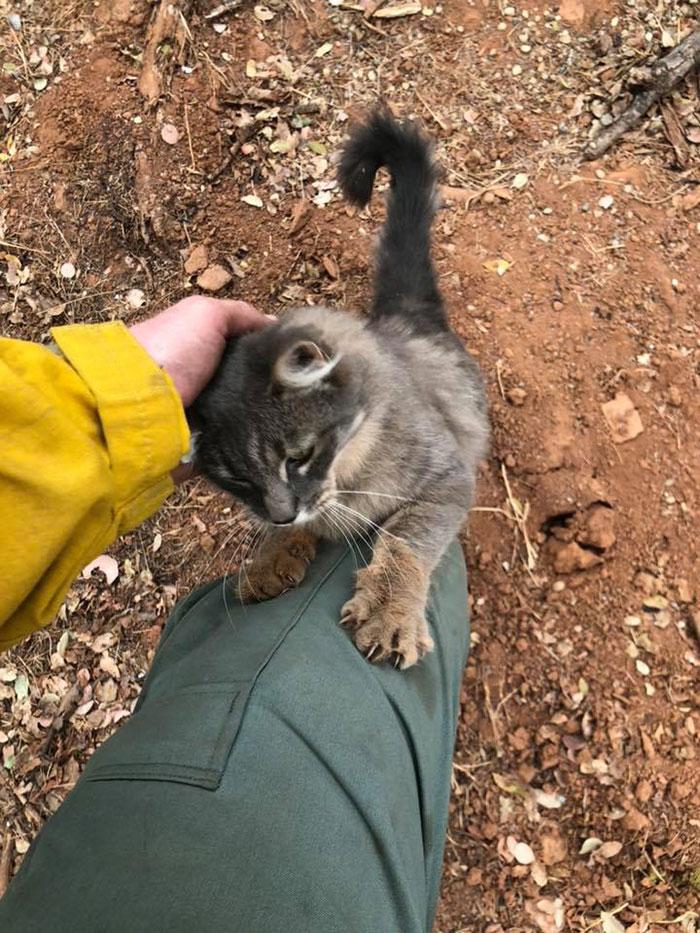 При тушении пожаров в Калифорнии пожарный спас невероятно ласкового кота