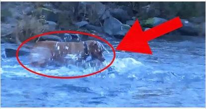 Собака резко забежал в воду. Когда он вышел — хозяин ахнут от того, что он его ему принес!