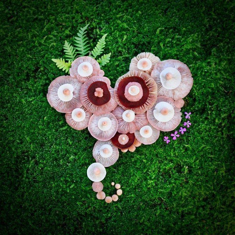 Шедевры природы: Финка создаёт картины из диких грибов
