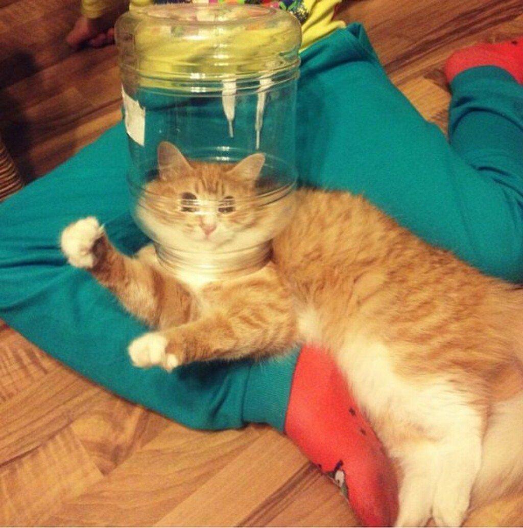 Смешные картинки котов до слез новые, лет прикольные