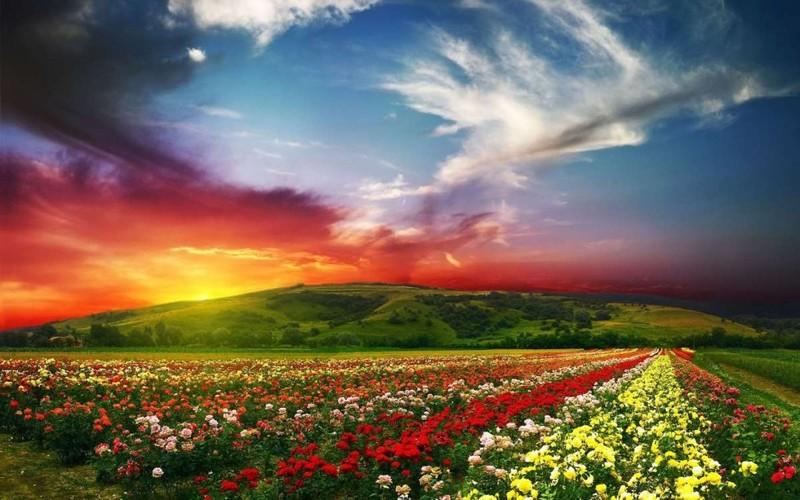 10. Долина цветов в Индии красивые места, прекрасная планета, чудеса природы
