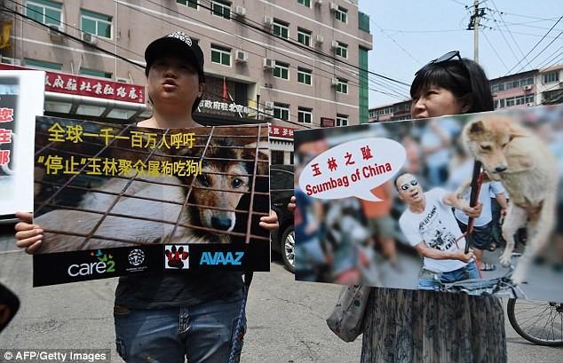 Едим, ели и будем есть: почему китайцы не желают отказаться от собачьего мяса? блюда из собак, животные, зоозащитники, китай, рука руку моет, собаки, собачатина, спасение