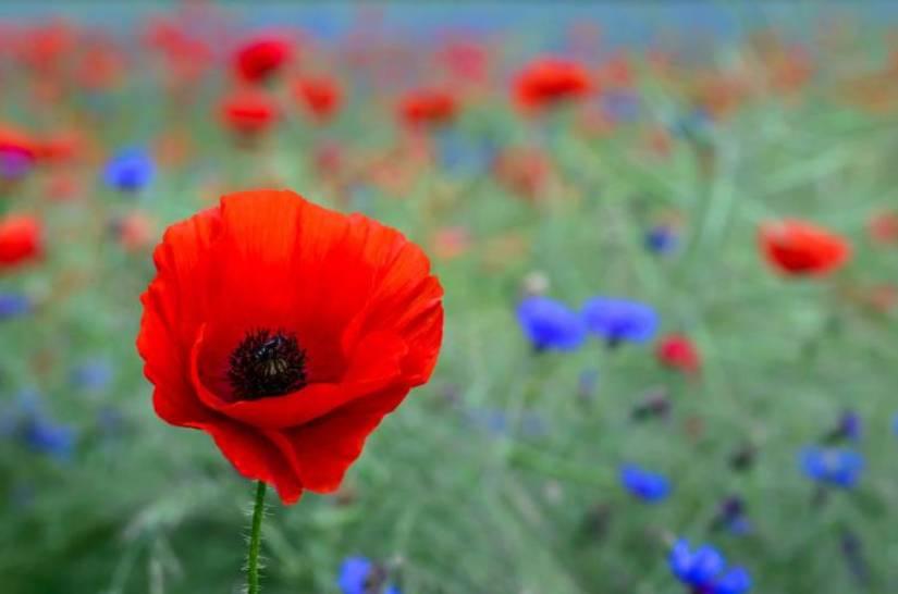 Какой цветок — ваш по праву …