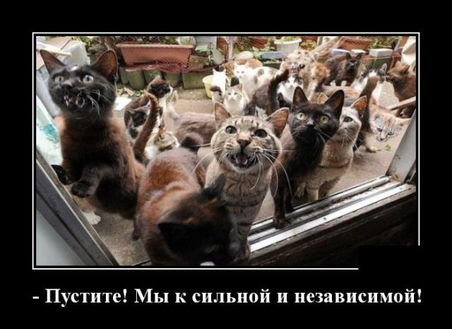Смешные и умные демотиваторы. 539 ( 30 фото )