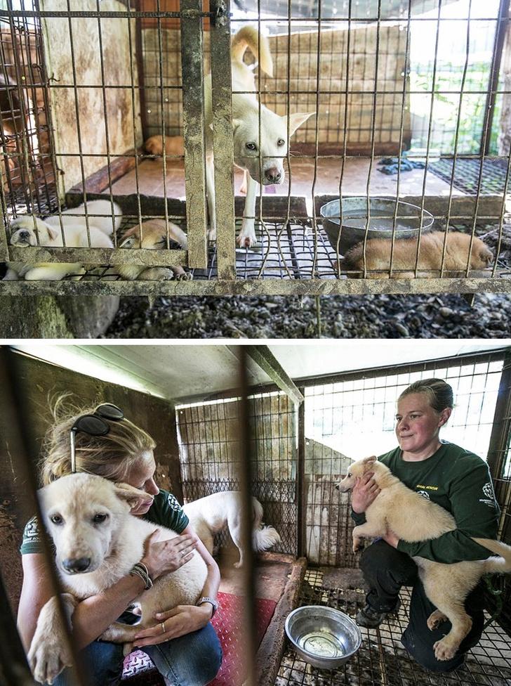 16 трогательных историй о животных, которые нашли в себе силы вновь поверить человеку Ксожалению, около, надороге, хозяин, Малыш, родился, Сейчас, счастлива, сосать, зоозащитников, отлесного, пожара, вбезопасное, место, видео, тронуло, Корее, сердца, всего, вЮжной