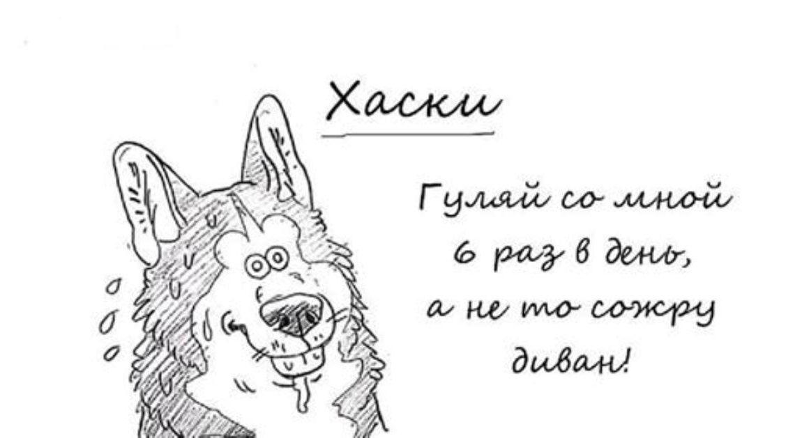 Смешной путеводитель по собакам всех пород